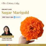 Sugar Marigold